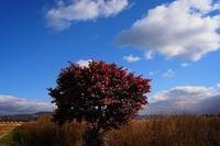 平城(へいじょう)散歩写真 - 牛の散歩写真・関西版
