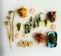 材料費¥0【春のワンプレート】 - 四季折々 日々*手作り*手仕事*