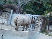 春のお江戸の夫婦クロサイ@上野動物園 2017.03.28 - ごきげんよう 犀たち