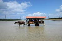 南ぬ島、美ら海の地へ - 西表島 #6 - - 夢幻泡影