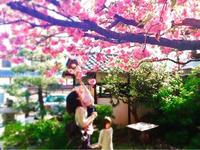 お寺ヨガとお花見会 in 本昌寺 - 全てはYogaをするために    動くヨガ、歌うヨガ、食べるヨガ