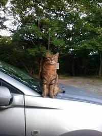美形の野良猫 - 向井恭一 の exciteブログ
