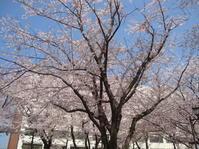 おはようございます!今日の 町田樹 オフィシャル・ウエブサイトが更新されていました! - Fouko