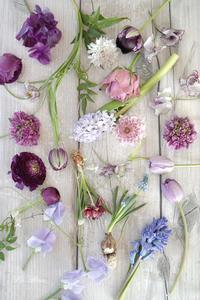 3月のレッスンで使ったmauve色のお花たち -  La Fleur