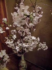 上野の桜は 震えていた - 月下逍遥