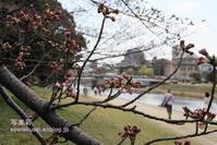 岡崎公園から帰る - 写楽彩