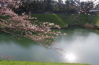 千鳥ヶ淵の桜はまだぼちぼち - バスレフ研究所 Personal Audio Laboratory