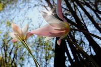 咲いた 咲いた♪ - お庭のおと