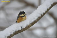 エイプリルフールの野鳥 - 奥武蔵の自然