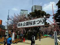 桜まつり - 心のカメラ / more tomorrow than today ...