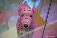 pink dog - aco* mode