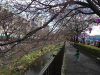 1歳8ヶ月29日。桜を見にドライブ - こんな私のはじめての妊娠・出産…そして子育て真っ最中