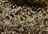 4月の雪 - 標高480mの窓からⅡ