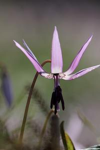 spring ephemeral #1 - miyabine's フォト日記2~身の周りのきれい・可愛い・面白い~
