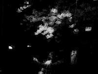 桜の下で - モノクロ備忘録