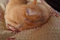 大王、キレイなお姉さんを枕にするのはやめなさい - もるとゆらじお
