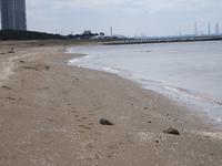 17年4月2日 海岸遊び&お花見♪ - 旅行犬 さくら 桃子 あんず 日記