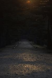 みささぎ @ 弥生の朝 - 東大寺が大好き