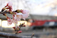 2017【桜】 - EH500_rail-photograph