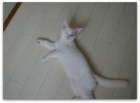 ご長寿猫はんぞうとの暮らし 「保護子猫たちとの想い出~ 天使?&悪魔?☆」 - たびねこ