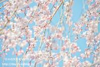花笑み - 日々の欠片を紡ぐ日々