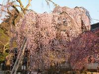 氷室神社 - 南都☆花模様