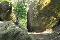 三浦半島の森へ9 - はーとらんど写真感