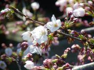 ようやく開花 - それは日常の記録