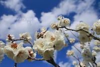 空 晴れて 満開のころ - FUNKY'S BLUE SKY