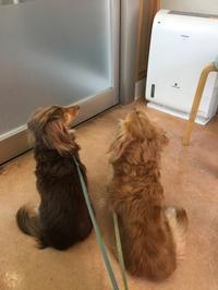 心配になって病院へ - きょうのはなwithくるみ~愛犬写真日記~