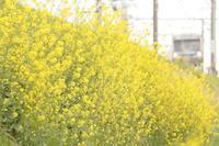 黄色い花 - はじまりのとき