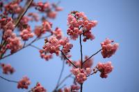 桜満開まであと少し!ただ、東京は・・・ - 動物園のど!