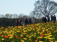 春爛漫 万博記念公園体験イベント - 大阪北摂のノルディック・ウォーク!TERVE北大阪のブログ