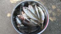 久しぶりに釣りに行く 天草市牛深町 - ステンドグラスルーチェの日常