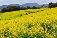 花の淡路へ - 峰さんの山あるき