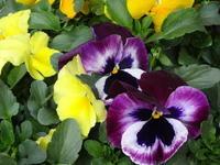 イベント出展のお知らせ - Iris Accessories Blog