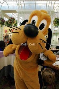 香港旅行2017年3月 1日目 #3 - Ruff!Ruff!! -Pluto☆Love-