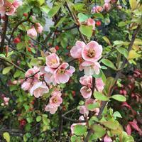 花*花 - テディベアのブログ Urslazuli
