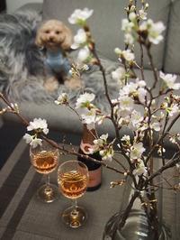 ロゼ・シャンでミニミニお花見会 - bistro le chien