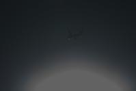 HND - 103 - fun time (飛行機と空)