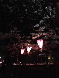 目黒川の桜〜中目黒 - 素敵なモノみつけた~☆