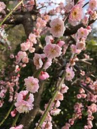 大分→鹿児島→熊本 - つながる日々