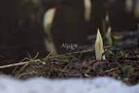 美しい思い出 - Aruku
