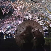 雨の夜桜 - summicron
