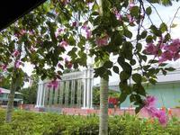 """桜が恋しい季節に.. シンガポールでいつもお花がいっぱいの場所 ♡ イスタナパーク - Singaporeグルメ☆"""" Ⅱ"""