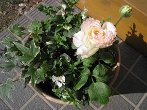 春の寄せ植え - 畑しごと 庭しごと 家しごと