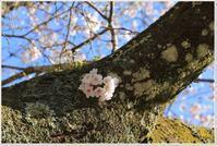 桜の咲いていない「お節句」 - ハチミツの海を渡る風の音