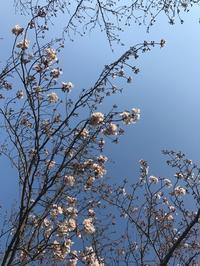 ☆Lapis 4/10で8周年....☆ - Lapis/sumileの日記