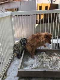 動物福祉=適正飼育へのサポート - 熊本の動物愛護を考える会