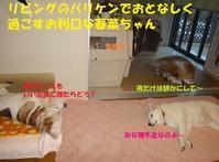目指せ「寂しん坊」脱出!! - もももの部屋(家族を待っている保護犬たちと我家の愛犬のブログです)